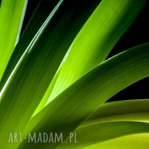 fotografie fotografia autorska fotografia, kwiaty studium