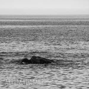 eleganckie fotografie fotografia autorska fotografia, morski smok