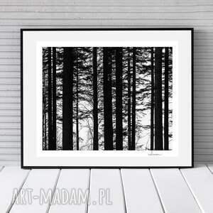 fotografie dekoracja autorska fotografia analogowa, las