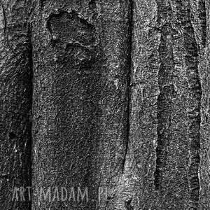 wyraziste fotografie fotografia autorska analogowa, las