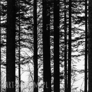 białe fotografie dekoracja autorska fotografia analogowa, las