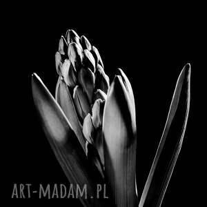 wyjątkowe fotografie zdjęcie autorska fotografia, kwiaty studium