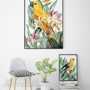 papuga plakat obraz 50x70 cm