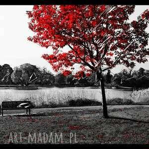 drzewo -obraz drukowany na płótnie canvas w świetnej
