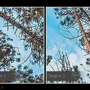 unikalne obrazy natura fotoobraz na płótnie - las drzewa