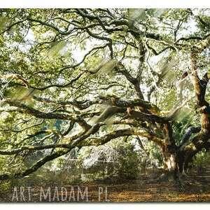 obrazy obraz drzewo 35 - 120x70cm na
