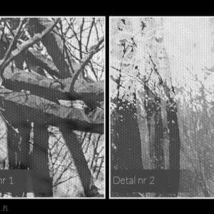 obraz na płótnie - pocałunek drzewa - 120x80 cm (29501)