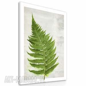 obraz obrazy zielone na płótnie - 70x100cm paproć