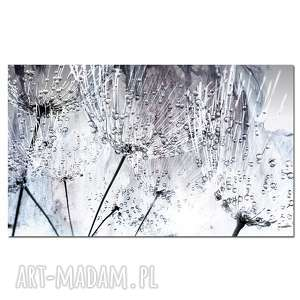 białe obraz xxl dmuchawce 10 -120x70cm