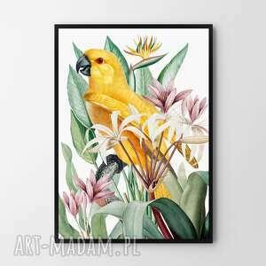 plakat obraz papuga 50x70 cm b2, papuga, ptak, kwiaty