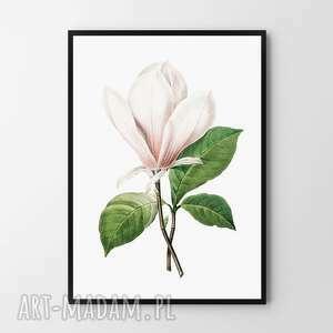 plakat obraz vintage magnolia 50x70 cm b2, kwiat, mangolia, róż plakaty