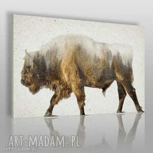 obraz na płótnie - żubr las 120x80 cm 26801, żubr, zwierzę, las, drzewa, natura