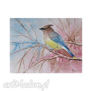 polskie ptaki jemiołuszka, akwarela, ptaki, ptak, obraz, akwarela