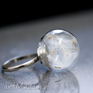 Dmuchawiec posrebrzany pierścionek, nasiona, dmuchawca, natura, mniszek, kula