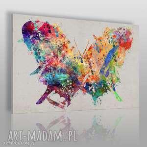 obraz na płótnie - motyl kolorowy sztuka 120x80 cm 72901, motyl, owad, kolory