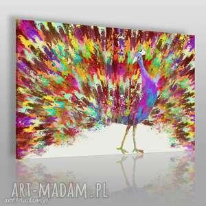 obraz na płótnie - paw ogon kolory 120x80 cm 59501, paw, ptak, kolorowy