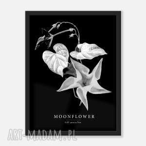 gau home moonflower plakat 30x40, moonflower, oryginalny prezent