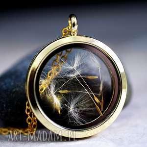 Pozłacany łańcuszek medalion z prawdziwym dmuchawcem, nasiona, dmuchawiec, pozłacany