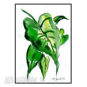 liść kalii iii, liście, grafika, rysunek, obraz, akwarela, rośliny
