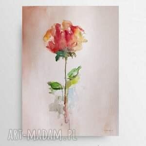 róża-akwarela formatu a4, róża, akwarela