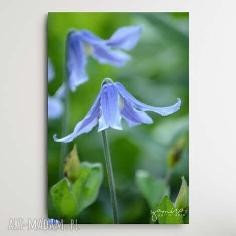 polne kwiaty ii - foto-obraz 40x60cm, kwiaty, foto obraz, na sciane