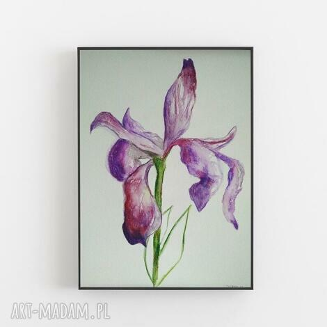 paulina lebida irys-akwarela formatu a4, akwarela, irys, kwiaty