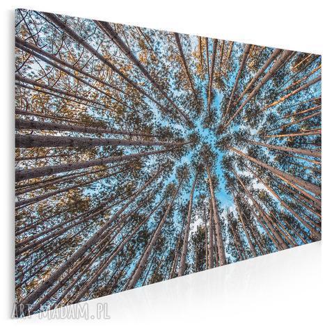 fotoobraz na płótnie - las drzewa niebo - 120x80 cm 904701, las, drzewo