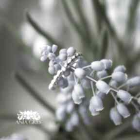 Simple beauty anna grys pierścionek, cyrkonia, biała, kuleczki