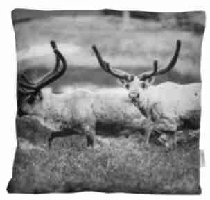 Na święta prezent! Poduszka dekoracyjna reindeer i poduszki
