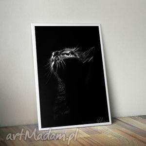 kot czarne tło, grafika, rysunek, skan, kot, światło grafika dom