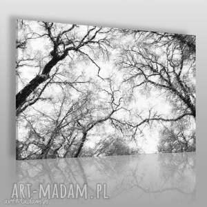 obraz na płótnie - drzewa czarno-białe 120x80 cm 10601 , konary, drzewa, gałęzie