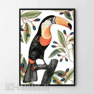 plakat obraz tukan w liściach 50x70 cm b2, ptak, tukan, liście