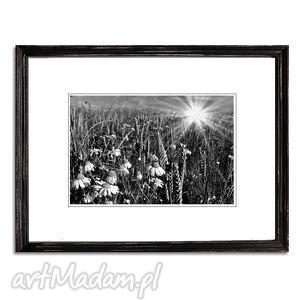 Łąka i rumianki, fotografia autorska, fotografia, pejzaż, łąka, kwiaty
