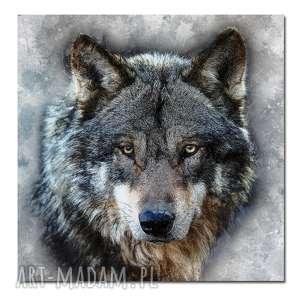 obraz duży wilk 3 - 70x70cm na płótnie zwierzęta, obraz, wilk