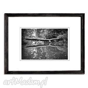 The twin /2/, fotografia autorska, fotografia, pejzaż, drzewo, las, rzeka