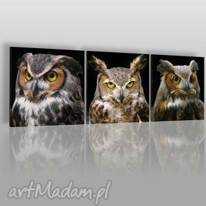 obraz na płótnie - sowy portret 3x40x40 cm 04202 , sowy, ptaki, tryptyk