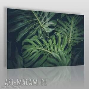 fotoobraz na płótnie - monstera liście 120x80 cm 914201, liście, natura, dżungla