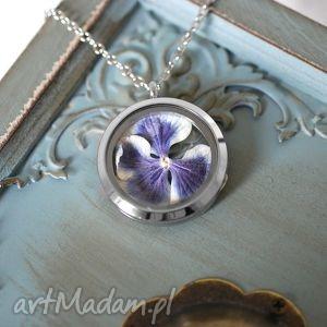 ♥ Prawdziwa hortensja III Medalion, hortensja, kwiat, medalion