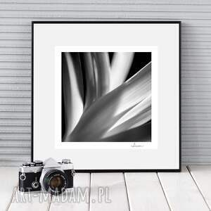fotografie autorska fotografia analogowa, kwiaty studium iv, analog, zdjęcie