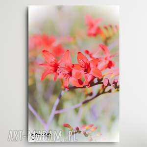 pink blossom - foto-obraz 40x60cm