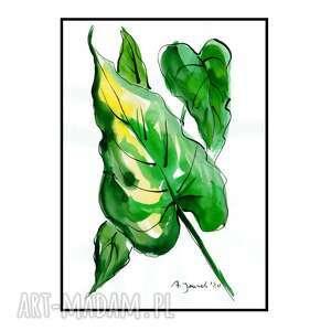 liść kalii ii, liście, grafika, rysunek, obraz, akwarela, rośliny