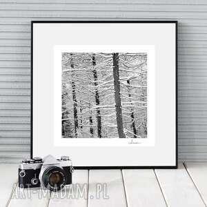 fotografie autorska fotografia analogowa, zimowe drzewa