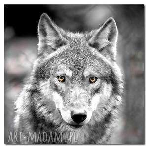 Obraz XXL WILK 2 -80x80cm design na płótnie autorski wzór, wilk, zwierzeta, wilki