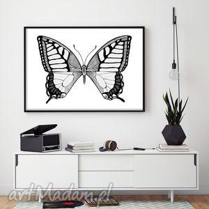 motyl a3, obrazek, ilustracja, plakat, motyl, motyle, motylek