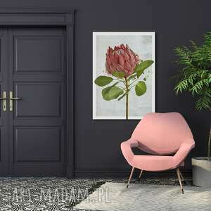 obraz drukowany na płótnie kwiat protea -duży format 70x100 0346