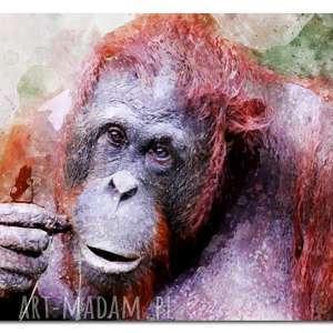 obraz orangutan 1 - 120x70cm na płótnie małpa design modern, obraz