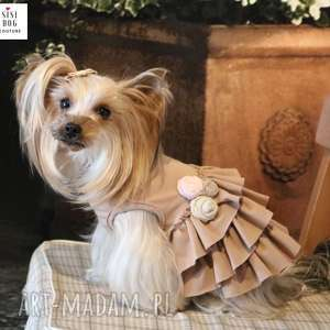sukienka dla psa jorka yorka chichuachua