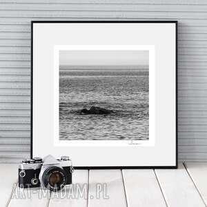 fotografie autorska fotografia, morski smok