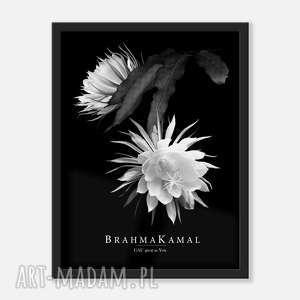 prezent na święta, plakaty brahma kamal plakat 30x40, brahma
