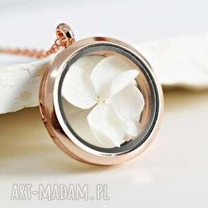 hortensja naszyjnik medalion, kwiat, hortensja, złoto, róż, natura
